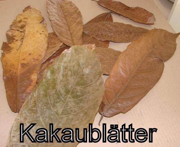 Kakaoblätter 10 Stück
